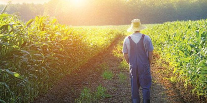 Διευκρινίσεις σχετικά με την υποχρέωση ασφάλισης και την τήρηση λογιστικών βιβλίων για τον χαρακτηρισμό του επαγγελματία αγρότη